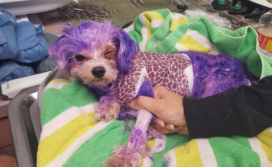Violet was left with severe chemical burns Photo: Facebook/Pinellas County Animal Services